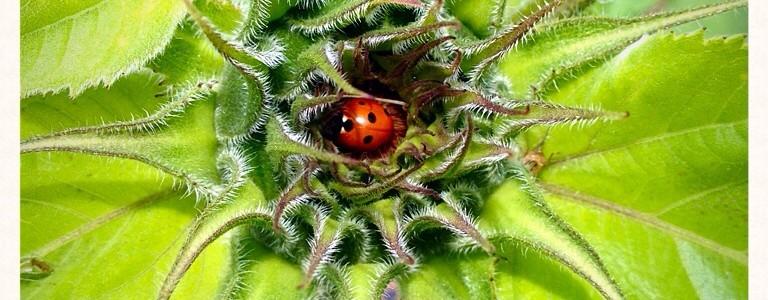 Ladybird home