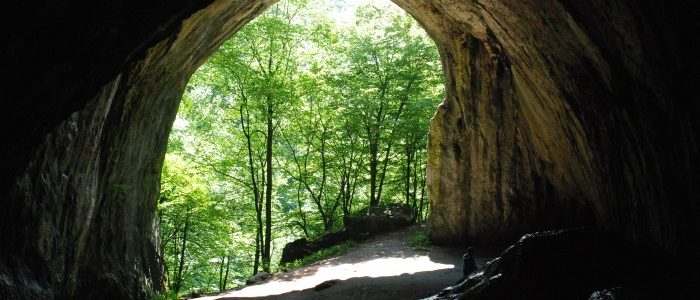 from inside, view of entry to the cave, with green trees and sunshine